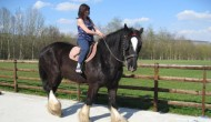 Photo shire horse